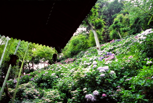 Kamakura19_1