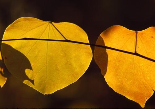 Leaves_10