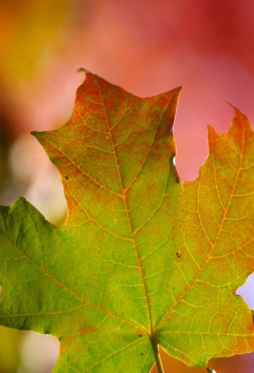 Leaves_13_1