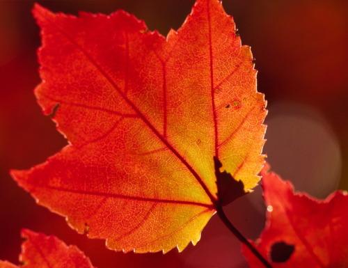 Leaves_14