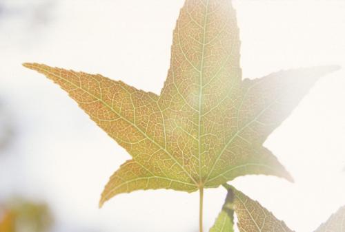 Leaves_17_1