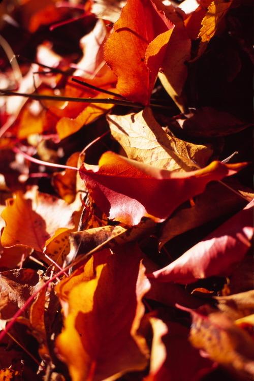 Leaves_43